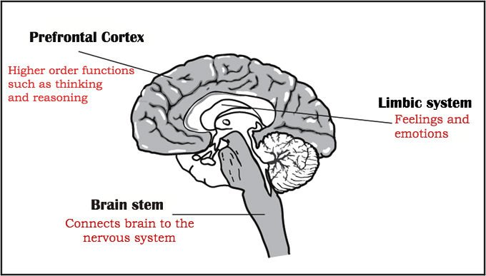 Parts of system that control behavior
